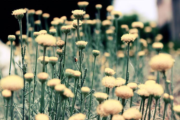 Trädgårdsinspiration i vildhetens tecken